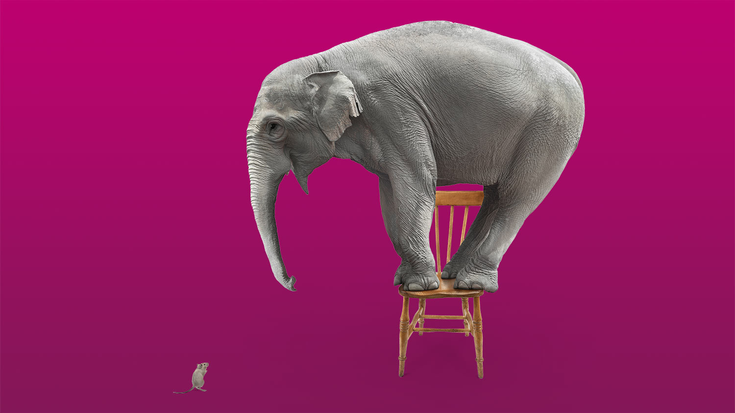 Thinking beyond Rishi's Riches: how to convince your boss you should attend the National Arts Fundraising School | Elephant on chair, afraid of a mouse